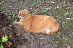 Lazy Scratching Cat