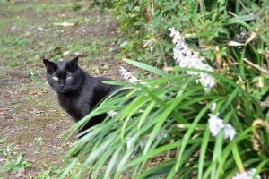 Cat and Low-Profile Flowers (Ophiopogon jaburan)