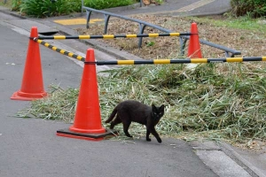 Cat and a Pile of Cut Grass