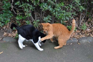 Cats Greeting Each Other