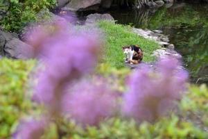 Cat Through Flowers
