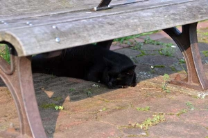 Cat Under The Bench On a Hot Day