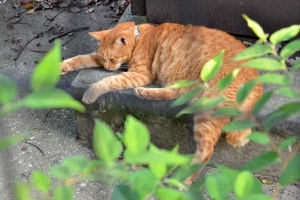 Cat On a Hot Day