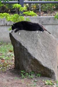 日本の夏 猛暑の日の猫 Cat Suffering From The Heat