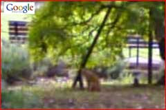 Google Street View Cat