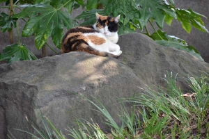 Calico On The Stone