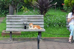 Bench Cat Mee-chan