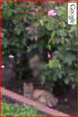 Google Street View Cats