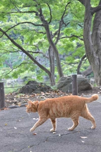 Cat Walking By