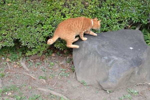 Cat Jumping Onto The Stone