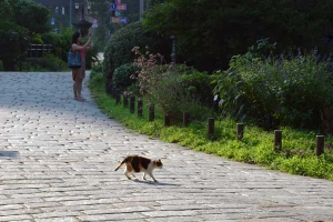 Calico Cat Crossing