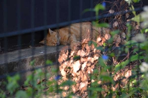 Cat Behind The Fence