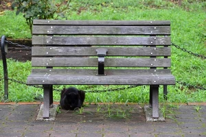 Cat and Bench