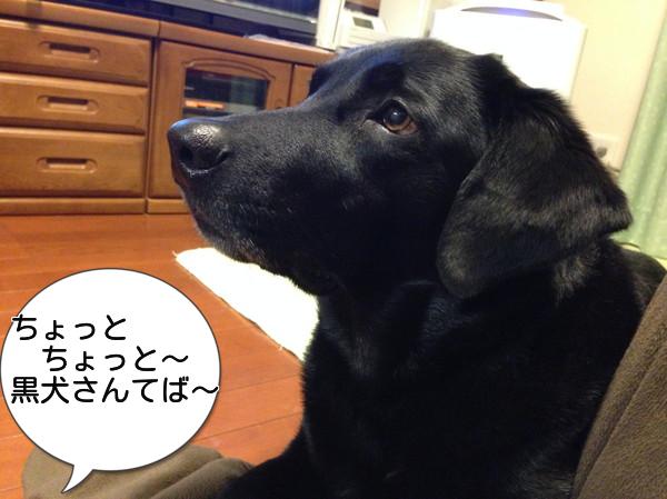 黒犬さん2