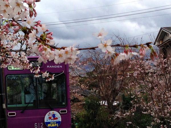 線路の桜3