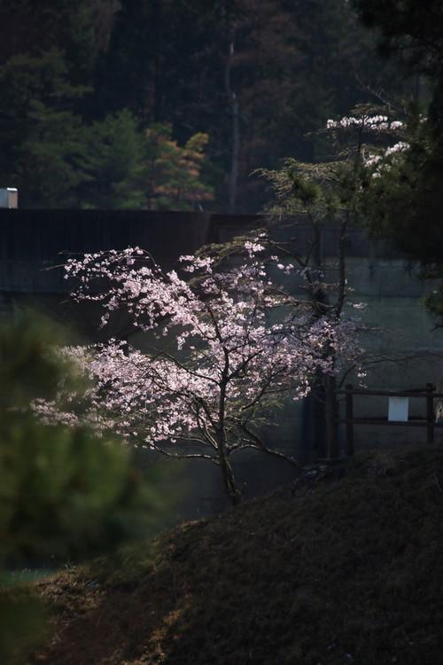 大野ダム 縦2