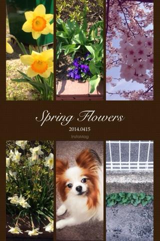 あちこちに春の花