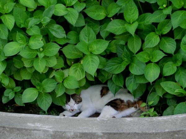 かわいい地域猫ちゃん