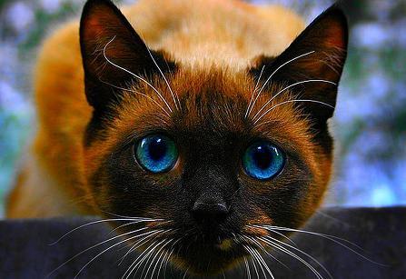 cat01256.jpg