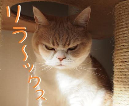 koyuki_03_02_131226143624.jpg