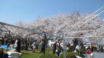 桜まつり2014