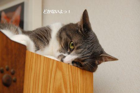 20140604miikun2.jpg