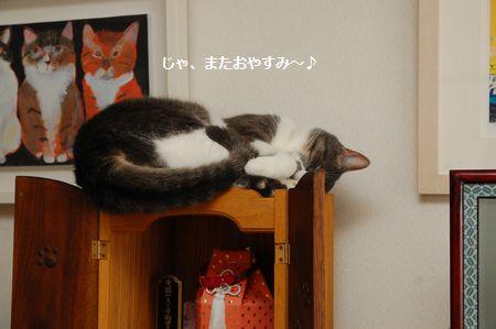 20140604miikun4.jpg