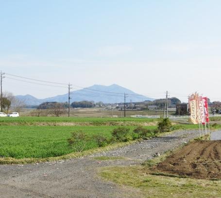 4月13日(日)小麦畑4