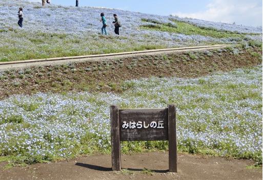 5月10日(土)ひたちなか海浜公園3