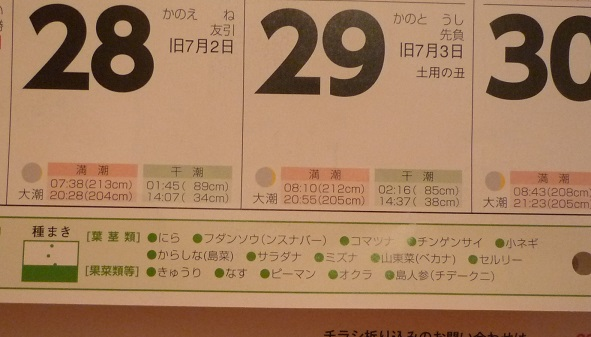 P1130127.jpg