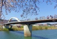 桜2014白石川堤一目千本桜2さくら歩道橋