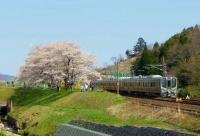 桜2014白石川堤一目千本桜9東北本線電車通過