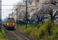 桜2014白石川堤一目千本桜14船岡駅485系