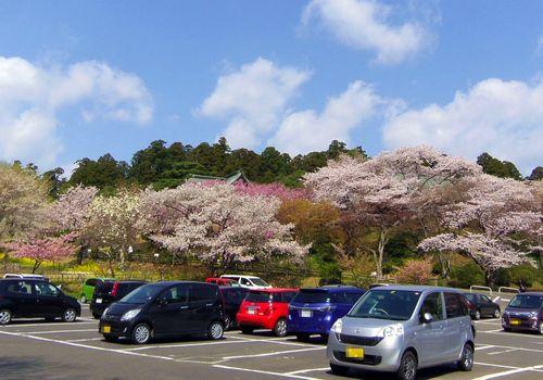桜2014塩釜神社1駐車場