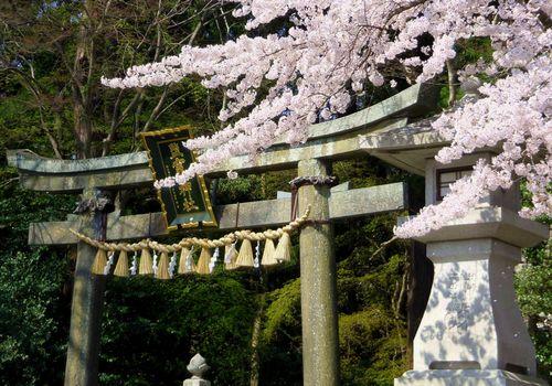桜2014塩釜神社3東参道鳥居