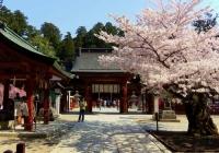 桜2014塩釜神社6唐門