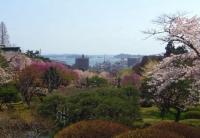 桜2014塩釜神社9塩釜港眺望