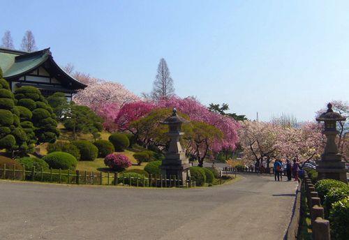 桜2014塩釜神社10社務所