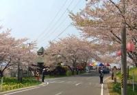 桜2014加護坊山2第一駐車場入口交差点