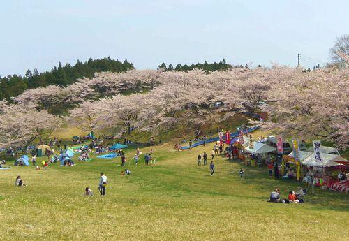 桜2014加護坊山5屋台