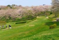 桜2014加護坊山8パークゴルフ場
