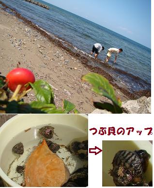 つぶ貝のアップ