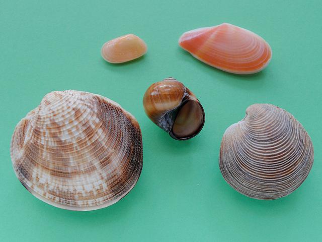 貝殻採集結果-140713