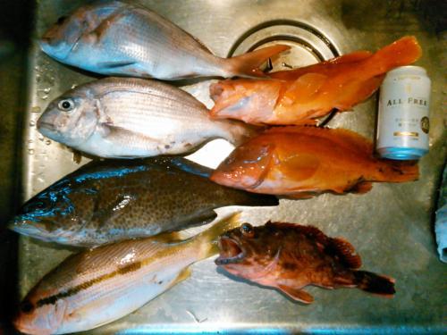 140420魚