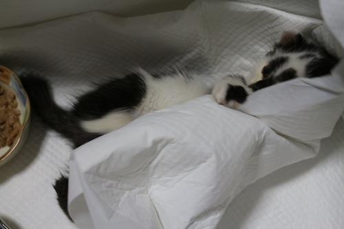 cat_etc083.jpg