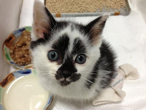 cat_etc089.jpg