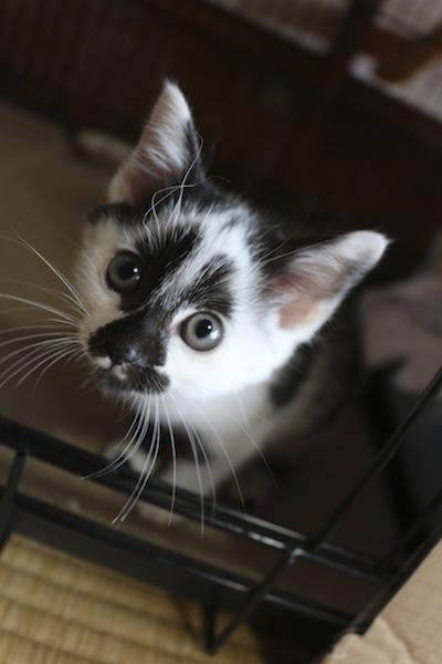 cat_etc098.jpg