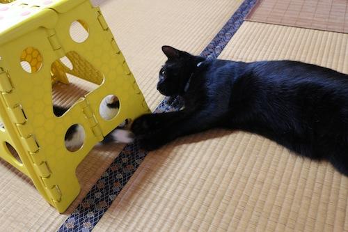cat_etc102.jpg