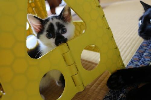 cat_etc103.jpg