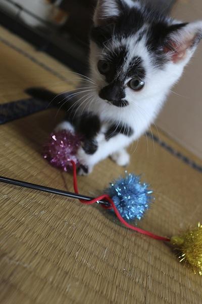 cat_etc104.jpg